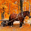 Horse in golden autumn - Stock Photo