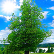 Lanscape with tree - Stock Photo