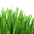 Stock Photo: Grass after rain