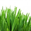 Grass after rain — Stock Photo #2290032