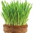 Spring grass — Stock Photo #2290121