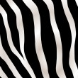 Stripped zebra background - Stock Vector