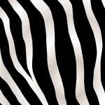 Stripped zebra background — Stock Vector
