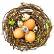 Nest with eggs — 图库照片
