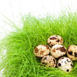 Quail eggs — Stock Photo #2675378