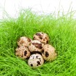 Quail eggs — Stock Photo #2675457