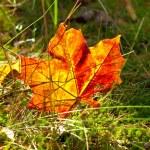 Осень — Стоковое фото