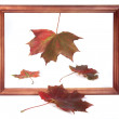 Stock Photo: Four maple leaves