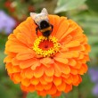 Bee on the flowe - Stock Photo