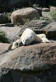 Bear in Berlin zoo — Stock Photo