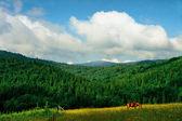 Carpathians landscape — Stock Photo