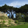 Park in San Francisco — Stock Photo