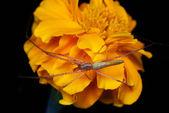 Spider on flower — Stock Photo