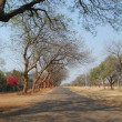 Park Road, Suburbs, Bulawayo, Zimbabwe. — Stock Photo