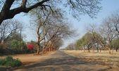 Park Road, Suburbs, Bulawayo, Zimbabwe. — Stock Photo