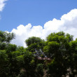 Foliage and Clouds - Stock Photo