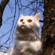 Beauty white cat — Stock Photo