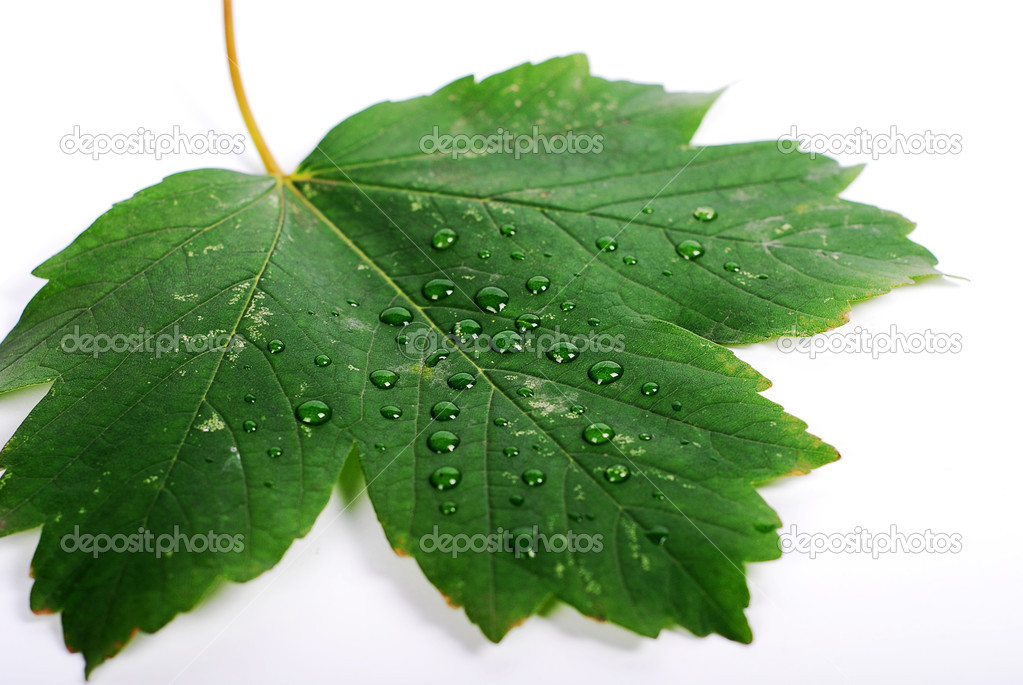 Green leaf with water drop — Stock Photo #1712897