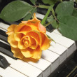 Royalty-Free Stock Photo: Rose over piano key