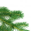 Foto Stock: Branch of pine isolated