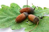 Acorn of oak over autumn leaf — Stock Photo