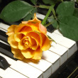 Rose over piano keys — Stock Photo