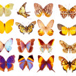 Some various butterflies isolated — Stock Photo #1501842
