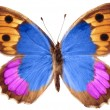 butterfly isolated — Stock Photo #1501855