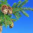 Fur-tree against blue sky - Stock Photo