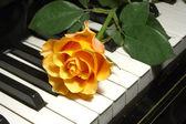 Rose over piano keys — Stock Photo