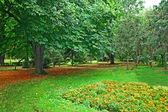 Park forest landscape — Stock Photo