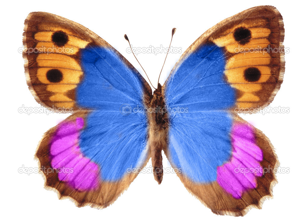  butterfly isolated  Stock Photo #1501855