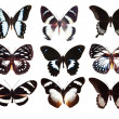 Some various butterflies isolated — Stock Photo #1510490