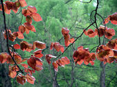 Red leaves in spring garden — Stock Photo