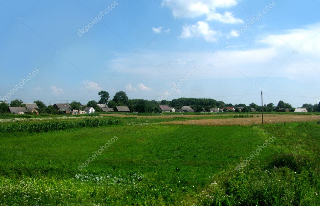 green June meadow and blue sky                      — Stock Photo #1512255