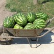 Stock Photo: Old iron handcart with water-melons