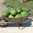 Old iron handcart with water-melons — Stock Photo