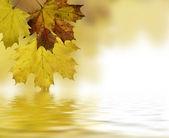 Su üzerinde yansıtan yaprak — Stok fotoğraf