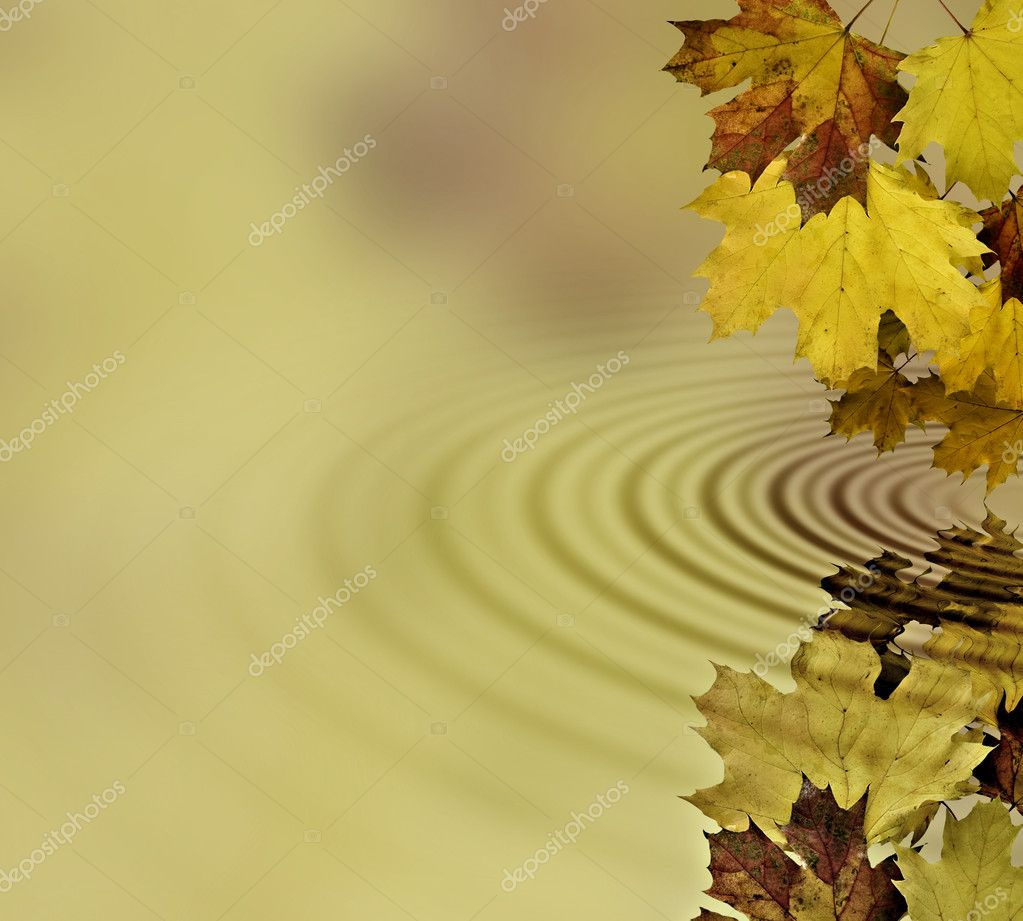 Autumn leaves reflecting into the water  Stock Photo #1501168