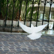 White dove — Stockfoto