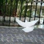 White dove — Stock Photo #1501705