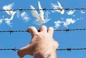 Freedom — Stockfoto