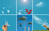 Hands, birds and sky — Stock Photo