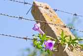 Barbed Wire Fence — Stockfoto