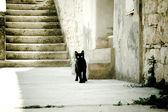Sunny black cat — Stock Photo