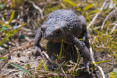 The frog in grass — Stock Photo