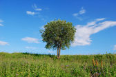 Tree in the green field — Stock Photo