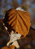 Old yellow leaf with snow — Stock Photo