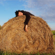 Stock Photo: Mlies on haystack