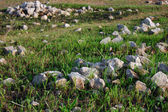 Light stones on the green grass — Stock Photo